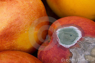 Mould On Peach