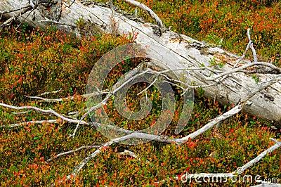 Moulder spruce