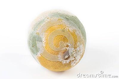 Mouldy lemon
