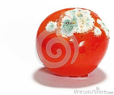 Mouldy Tomato
