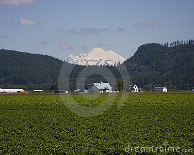Mount Baker and farmlands