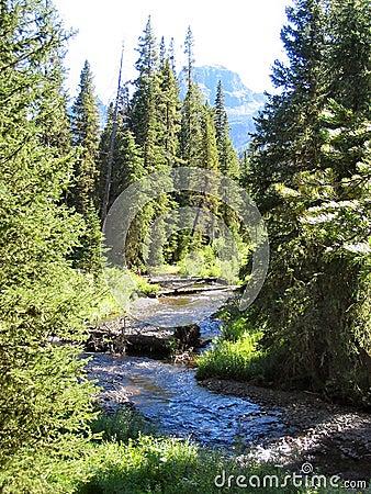 Mount creek słonia