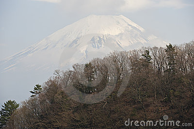 Mount Fuji behind forested ridge