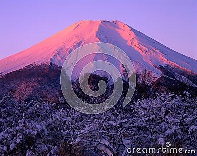 Mount Fuji CXV