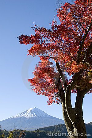 Mount Fuji in Fall VIII