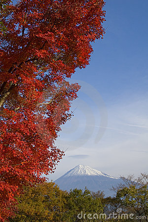 Mount Fuji in Fall XI