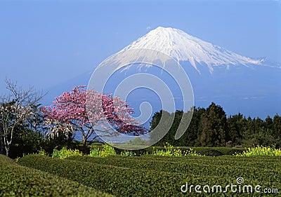 Mount Fuji I
