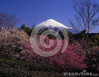 Mount Fuji IV