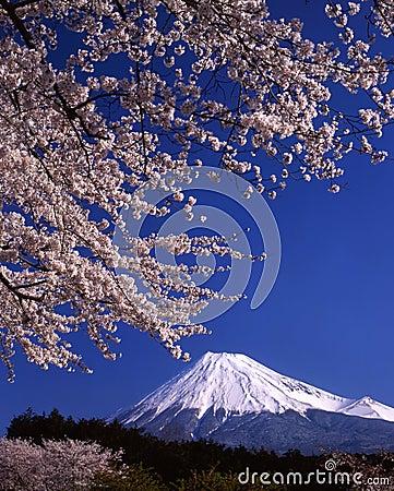 Free Mount Fuji LV Royalty Free Stock Photos - 2005588