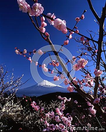 Free Mount Fuji VI Stock Images - 1714574