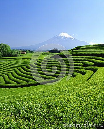 Free Mount Fuji XCII Royalty Free Stock Photography - 2642777