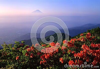 Mount Fuji XVI