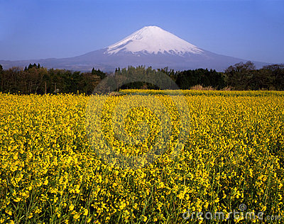 Mount Fuji XXVI
