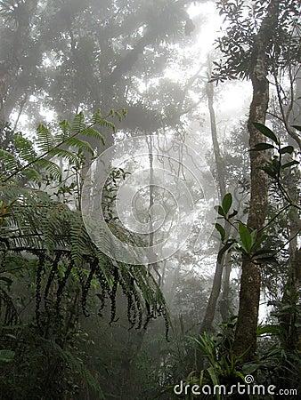 Free Mount Kinabalu Cloud Forest Sabah Borneo Stock Photo - 1565230