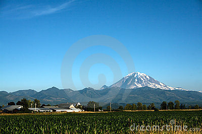 Mount Rainier and Cornfield
