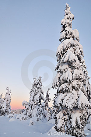 Mount Seymour Winter Morning