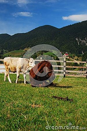 Free Mountain Animals Royalty Free Stock Photo - 17270315