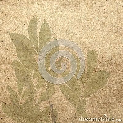 Mountain ash leafs
