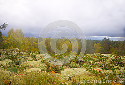Mountain autumn wood