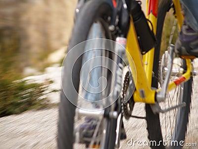 Mountain Bike in Motion