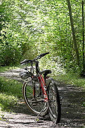 Mountain bike on trail