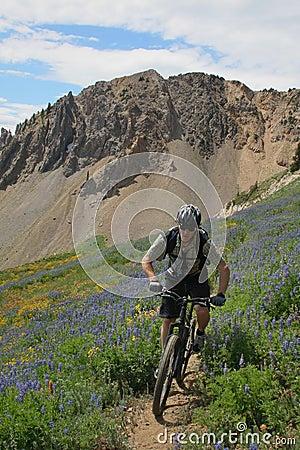 Free Mountain Biker Royalty Free Stock Photos - 6478688