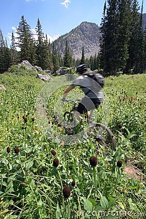Mountain biker blur