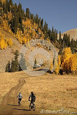 Free Mountain Biking With Aspen Trees Stock Image - 6672651