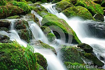 Mountain creek cascade