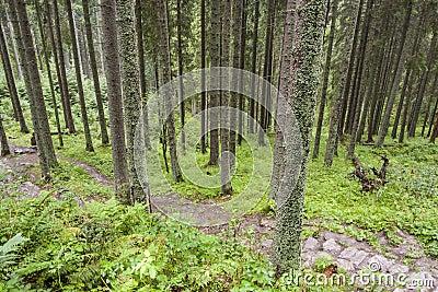 Empty mountain path - Tatra, Poland.