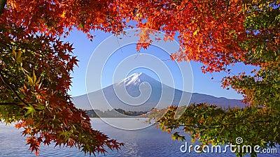 Mountain fuji met rode steekproef in Autumn, het meer van Kawaguchiko, Japan stock footage