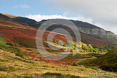Mountain full of red ferns, and green pastures