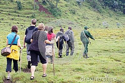 Mountain gorilla Trekking Editorial Stock Image