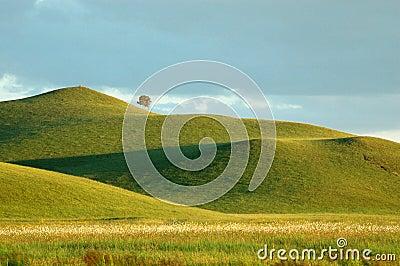 Mountain & Grassland