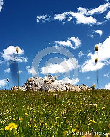 Mountain green fields