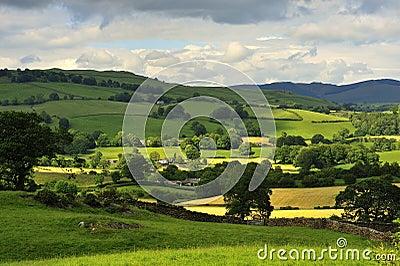 Mountain hay fields, Cumbria
