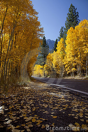 Free Mountain Highway And Aspens Royalty Free Stock Photo - 22597165