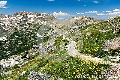Mountain Hiking Trail Through Wildflowers