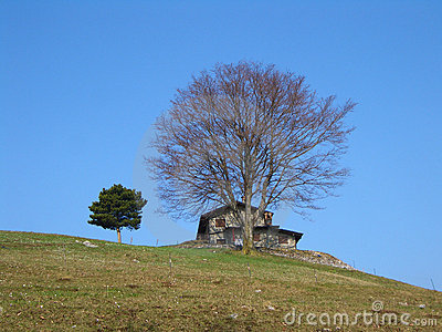 Mountain house and tree