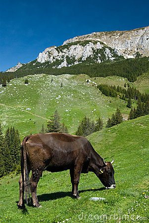 Mountain husbandry in Romania