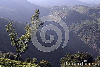 Mountain image tea estates
