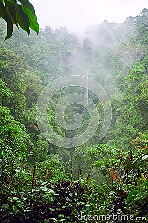 Mountain jungle