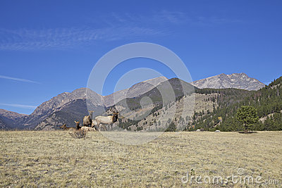 Mountain Landscape and Elk