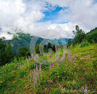 Mountain landscape with flowers on foreground in Svaneti