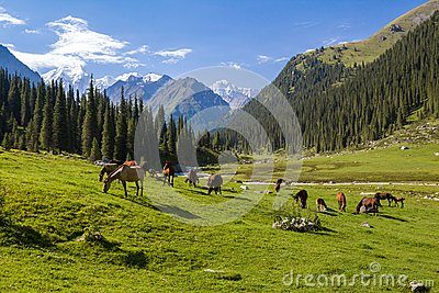 Mountain landscape with herd of horses