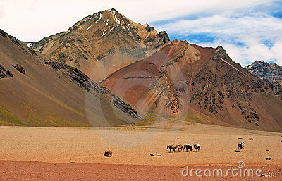 Mountain landscape with horses in front, Argentina