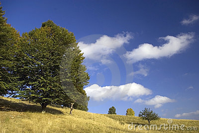 Mountain meadow in autumn with blue sky