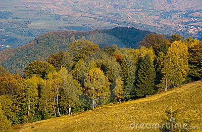 Mountain meadow and forest in autumn