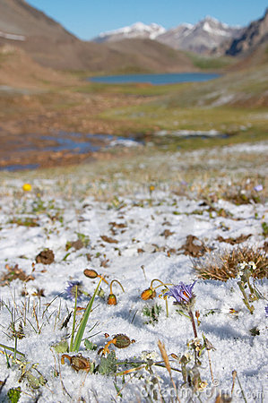Free Mountain Meadow In The Morning After Heavy Snow Stock Images - 553594