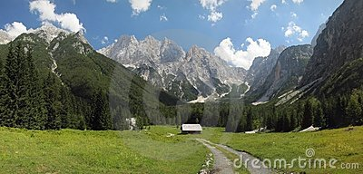Mountain meadow in Julian Alps near Krajnska Gora